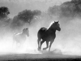 nature animal fog freedom